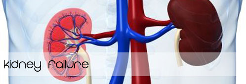 Homeopathic Medicines For Kidney Failure Or Ckd Treatment